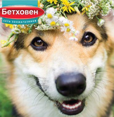 Интернет-магазин зоотоваров с доставкой по всей России