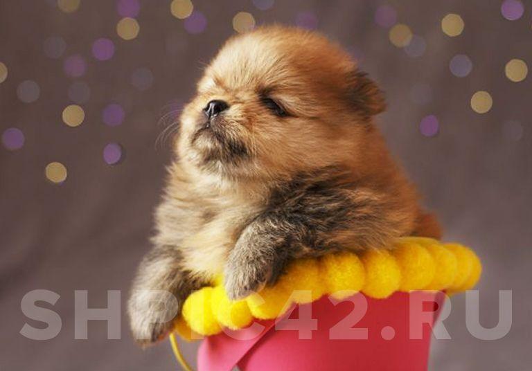 Куплю щенка в рассрочку